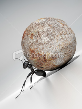 Ant pushes rock, showing determination.